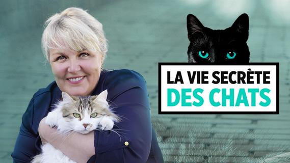 Replay La vie secrete des chats - Vendredi 26 juillet 2019