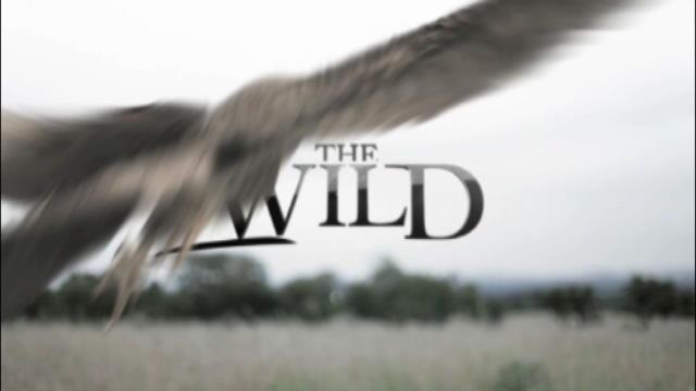 Replay The Wild - Lundi 11 avril 2016