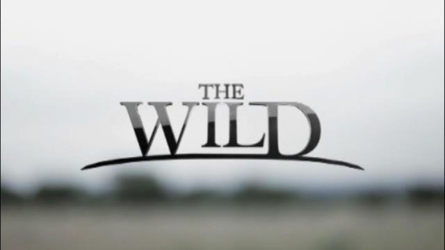 Replay The Wild - Vendredi 22 janvier 2016
