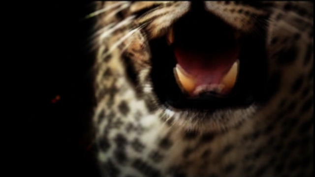 Replay The Wild - Vendredi 28 octobre 2016