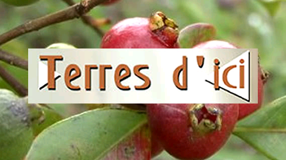 Replay Terres d'ici - Lundi 08 avril 2019