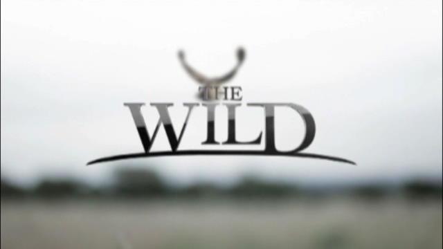 Replay The Wild - Jeudi 03 mars 2016