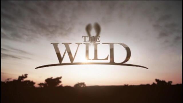 Replay The Wild - Mardi 20 septembre 2016