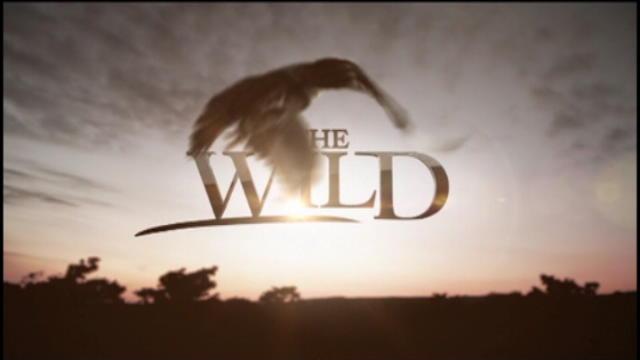Replay The Wild - Jeudi 27 octobre 2016